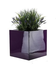 Cube / Square Planter In Purple Filled With Lavender. From The Cube Planter  Range At