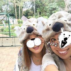 コアラに化けた笑 恥ずかしかったけどやってみたよ 初めてコアラを抱っこしてテンションも #currumbinwildlifesanctuary  #Australia  #GoldCoast  #nature  #Koala #Sanctuary   by ululani_1221 http://ift.tt/1X9mXhV