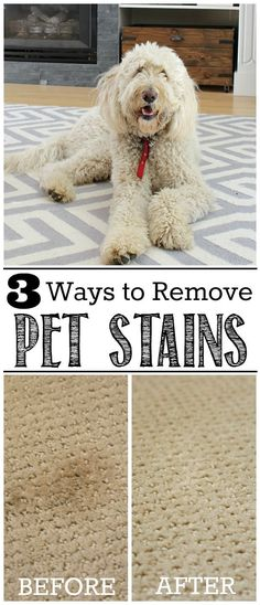 Great tips on how to remove pet stains from carpets, including DIY green cleaning methods