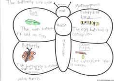 Butterfly anatomy AND life cycle in one? Might just have to give this one a try...