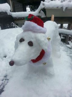 Snow-doxie