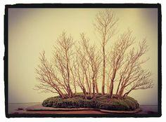 Buenos días! Feliz domingo. Hoy domingo, abierto de 10:00 a 14:00. BONSAIKIDO, tu escuela de #bonsai en Madrid. Paseo de la Castellana, 100, bajo izda. www.bonsaikido.com - #kokufu 1980