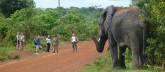 Elefantes en Parc Mole
