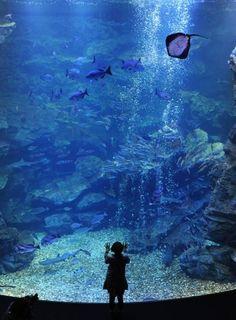 Beautiful Kyoto Aquarium, Japa Love Moments