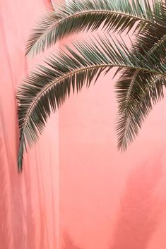 New Wall Paper Phone Nature Trees Posts Ideas Plant Wallpaper, Cute Wallpaper Backgrounds, Tumblr Wallpaper, Screen Wallpaper, Cute Wallpapers, Wallpaper Notebook, Leaves Wallpaper, Iphone Backgrounds, Phone Wallpapers