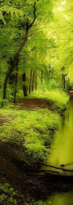 This is just gorgeous; green everywhere!