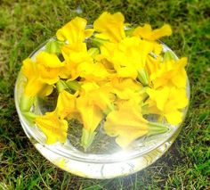 Mimulus Bach Flower Remedy for phobias and timidity - Creature Comforters