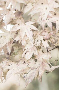Autumn's Soft Colors