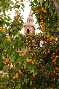 *SPAIN ~ orange groves in the streets of Seville