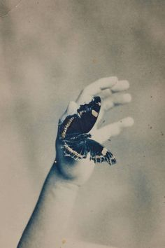 Masao Yamamoto evokes memory, childhood, and innocence in his work from his Nakazora series of small-scale photographs that unfold as waking dreams. He captures a grainy, old photograph of a child's hand reaching upwards. Placed atop this image is that of a darkly hued butterfly. It seems that the hand may be able to catch the elusive insect, but only the moment prior is preserved.