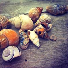 #splendidsummer sea shells