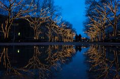 Trees decorated with Christmas lights are reflected in a puddle as people walk along the Unter den Linden promenade at dusk in Berlin on Nov. 28. (Thomas Peter/Reuters)