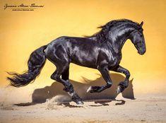 IGNACIO ALVAR-THOMAS PHOTOGRAPHER | Ignacio Alvar-thomas Photograpy. Equine and fashion photographer. Especializado en caballos y moda. Horse photography. Fotografía ecuestre