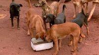 """""""O GRITO DO BICHO"""": Abrigo de animais abandonados corre risco de fecha..."""