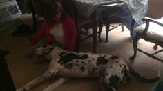 "If you're happy and you know it wag your tail. A beautiful spotted Great Dane named Abby Doo wags her tail on cue while her human Madi McGlone sings to her a canine version of the children's song ""..."