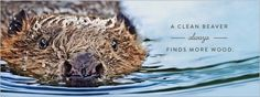 Waxing The Beaver - iDidAFunny
