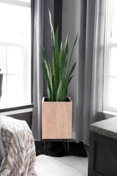 Modern DIY plywood planter with hairpin legs planter plywoodprojects buildplans modernplanter diyplanter woodworking planterbuildplans largediyplanter 707135578971151032 Large Diy Planters, Modern Planters, Diy Furniture Cheap, Furniture Ideas, Luxury Furniture, Plywood Projects, Diy Projects, Oversized Wall Art, Snake Plant