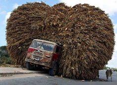 http://images.forum-auto.com/mesimages/947975/CowLoad.jpg