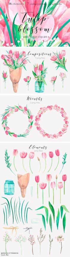 Tulip Blossom. Watercolor Clip Art - 1380810