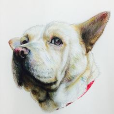 Prismacolor pencils on paper Artist Scott Wilson