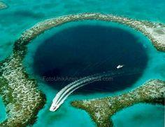 Palung adalah jurang yang berada di dasar laut.