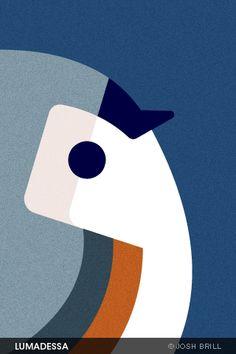 finch by josh brill #bird