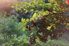 Garden photography golden hout