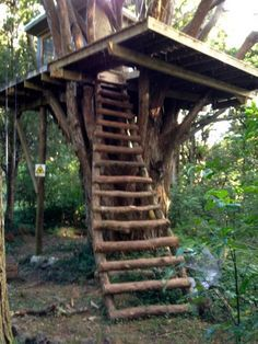 Simple Tree Houses tree fort ladder, gate, roof [finale] | tree houses, tree house