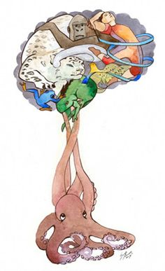 The Brain Forest