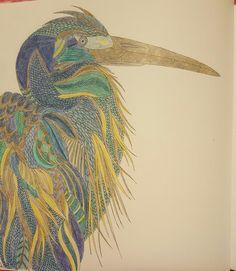 Animal Kingdom Color Me Draw By Millie Marotta Coloring BookAnimal