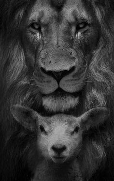 New quotes bible lion words ideas Jesus Wallpaper, Lion Wallpaper, Antique Wallpaper, Wallpaper Quotes, Jesus Christ Painting, Jesus Art, Lamm Tattoo, Black And White Lion, Lion And Lamb