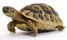 Tortoise Amazing Facts in Hindi Reptiles, Mammals, Baby Animals, Cute Animals, Sky Art, Tortoises, Animal Photography, Travel Photography, Exotic Pets