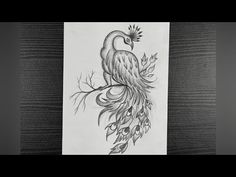 Peacock Drawing || How To Draw A Peacock Step By Step || Beautiful Peacock Drawing || Pencil Drawing - YouTube Pencil Sketching, Pencil Drawings, Peacock Drawing, Youtube, Beautiful, Art, Art Background, Peacock Painting, Kunst