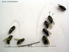 """Magnus Muhr  y su ingenio para emplear el detalle de lo """"desagradable"""" (moscas muertas) creando situaciones graciosas e ingeniosas en muchas ocasiones."""