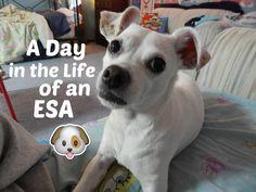10 Best Emotional Support Dog Esa Vests Images Emotional Support Animal Vests Dog Supplies