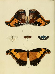 n259_w1150 by BioDivLibrary, via Flickr