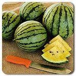 Organic Baby Doll F1 Hybrid Watermelon