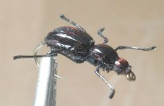 Fly Tying Patterns | fly_tying_patterns_beetle.jpg 11-Nov-2013 09:37 19K