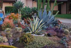 Succulent Gardening ~ California Succulent Garden resource