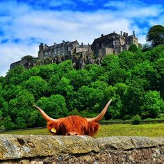 Look who photobombed this pic of Stirling Castle. What a cheeky cow! Pic @charles.mcguigan via Instagram