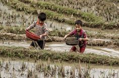 Boys working in the paddy field, Sa Pa, Vietnam | por MonikaRozanska.com