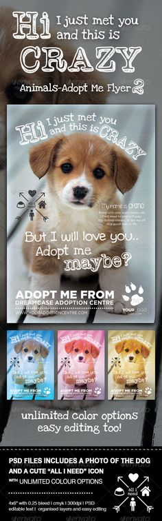 Animals - Adopt Me Flyer 2 - Events Flyers
