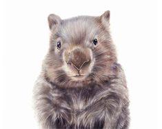 illustration nursery art wombat art art by NayanaIliffe Animal Sketches, Animal Drawings, What Is A Wombat, Nursery Prints, Nursery Wall Art, Australian Animals, Australian Art, Woodland Nursery Decor, Woodland Baby