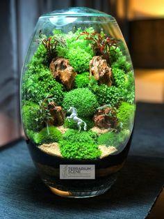 Résultat d'images pour terrarium mini jardin