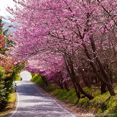 春之隧道 The Tunnel of Spring, Taichung by yameme (為五斗米折腰中....), via Flickr