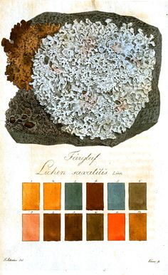lichen illustration with color palette Botanical Flowers, Botanical Illustration, Botanical Prints, Nature Illustration, Fungi, Merian, Art Plastique, Color Theory, Textures Patterns