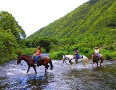 Horseback riding in Hawaii. On Hilo, there's a route that takes the riders through different climate zones. I was too tired to do this a few years ago. I'm ready for this now!
