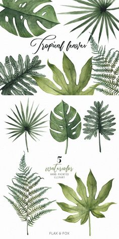 Fonts Alphabet Discover Tropical Leaves Watercolor Elements hand painted clipart diy clip art free commercial use Watercolor Plants, Watercolor Leaves, Watercolor Art, Motif Tropical, Tropical Leaves, Leaf Drawing, Plant Drawing, Botanical Illustration, Botanical Prints