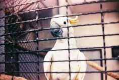 Parrot.  Taken with Nikon FM10 loaded with Ferrania Solaris 200 expired