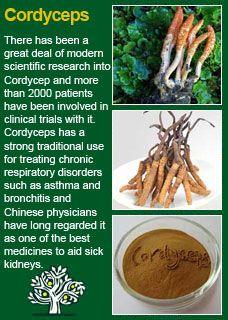 Richard Whelan ~ Medical Herbalist ~ Reishi
